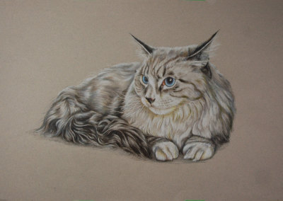 Portrait Drawings of Cats