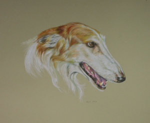 Portrait Drawings of Dogs
