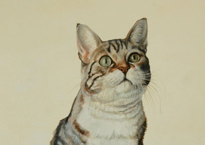 From photo to portrait of Stella the Tabby cat in oil on canvas