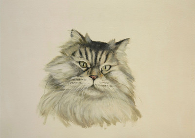 From photo to portrait painting of Persian cat in oil on canvas