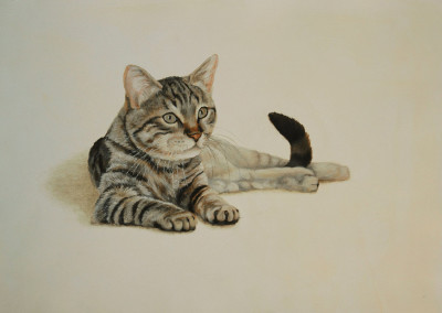 From photo to portrait of a reclining Tabby cat in oil on canvas