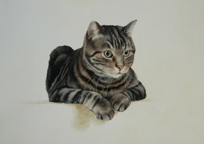 From photo to portrait in oil of a Tabby cat on the look-out
