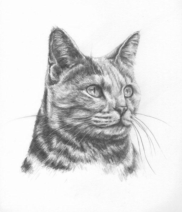 Photo to portrait: Beautiful cat portraits in pencil ...