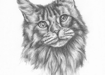 Portrait of the face of a persian cat in graphite pencil