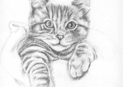 From photo to portrait drawing of a ginger tabby kitten