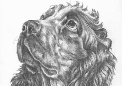 Dogs in Graphite Pencil