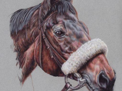 Portrait Drawings of Horses